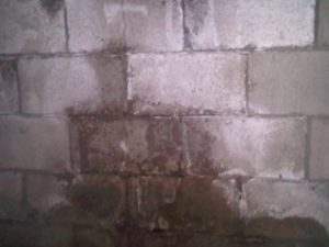 Saturated Block Wall From Water Tred In The Blocks